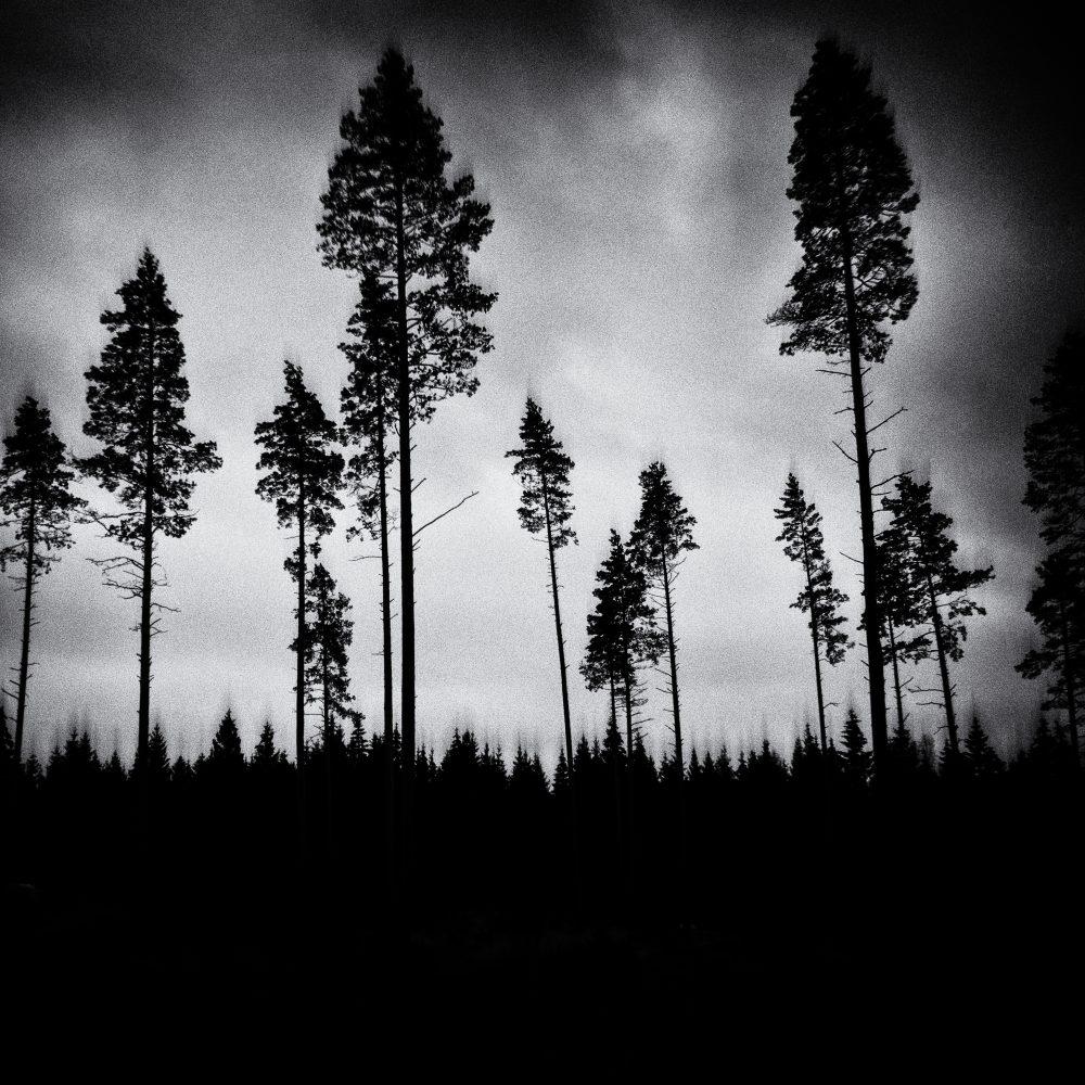 Skogen mot Bittene