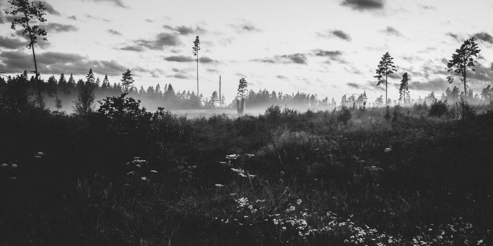 Borderlandsskogen
