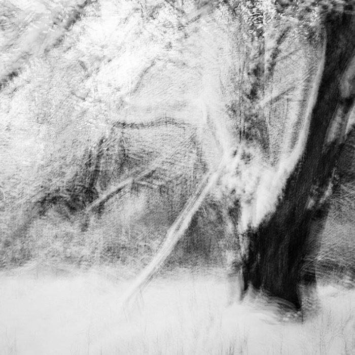 Vinterträdet